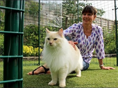 Cat Enclosure - Outdoor Pet Run (Catio) | Omlet Australia Pet Products