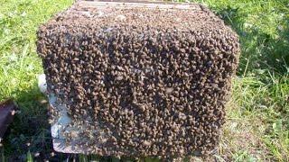 Все Секреты Пчеловодства!!!!! КАК ВОРУЮТ ЧУЖИХ ПЧЁЛ!!!!!