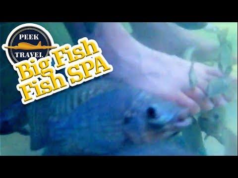 BIG Fish Fish SPA