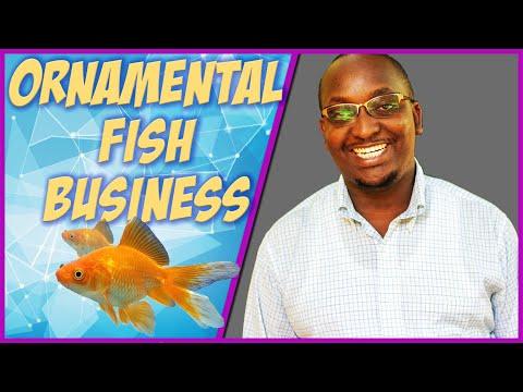 Ornamental Fish Farming In Kenya