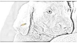 Auto Draw 2: Chocolate Lab Puppy