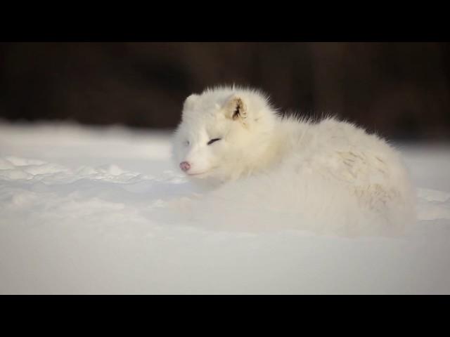 Nature, Québec, Canada - Photographie faune et paysage - Wildlife and Landscape photography