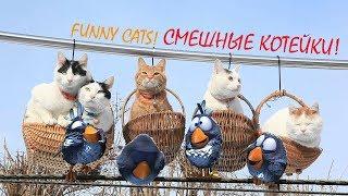 Смешные видео про кошек и котов.Приколы.
