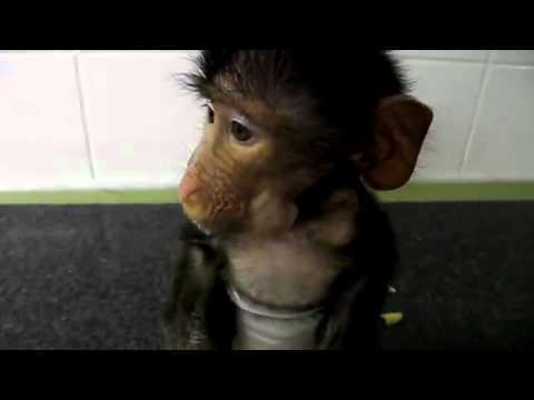 Нереально милая маленькая обезьянка