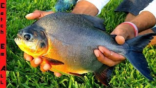 exotic-pets-released-fish-in-pond