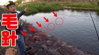 毛が付いた針を沢山川に流したら… thumbnail