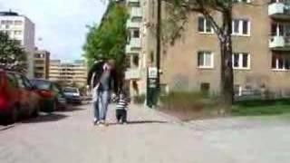 スノウちゃんの散歩