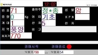 예천축산농협 05월  07일 경매가축시장