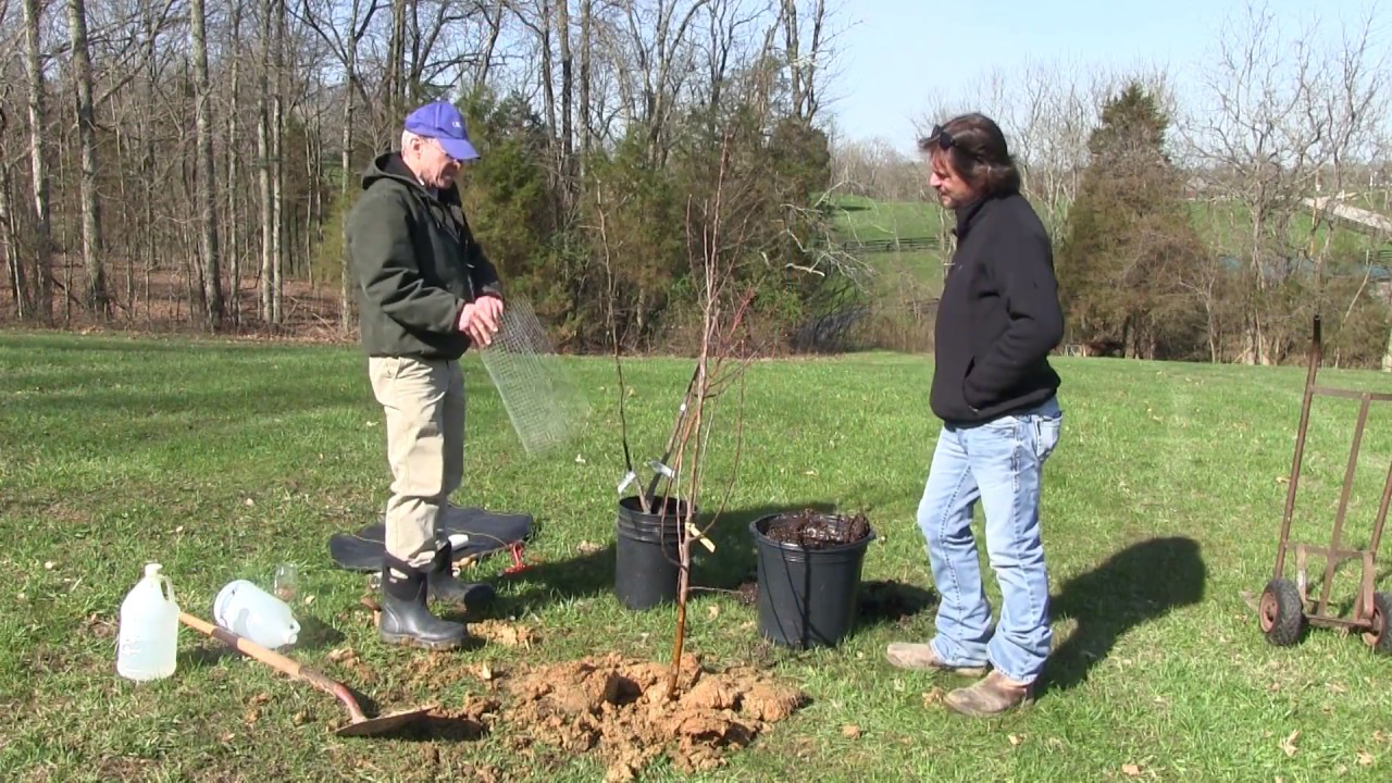 How-To Plant an Apple Tree (Everything you need to know!)
