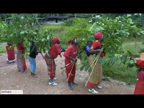 Entheo-Science / Süster Strubelt: Traditional use in Gabon: Iboga Dancing therapy