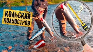 Рыбалка на Кольском полуострове  Сёмга!