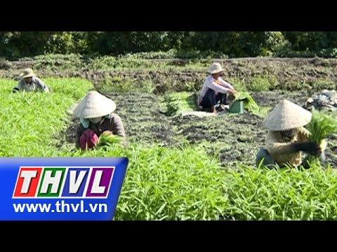 THVL | Nông dân miền Tây – Kỳ 56: HTX rau an toàn Hòa Phát đi lên từ cây rau muống