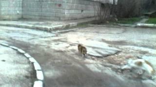 Порно котов