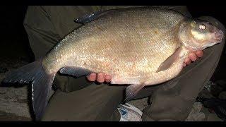 Рыбалка в Астрахани 2019. Мечта рыбака и отдых всей семьей в Астраханской области.