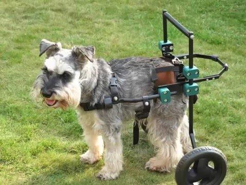 cheapest pet insurance for older dogs