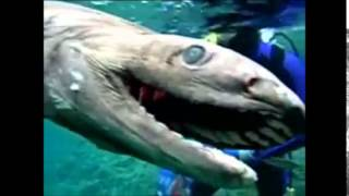 Un requin préhistorique trouvé au Japon!