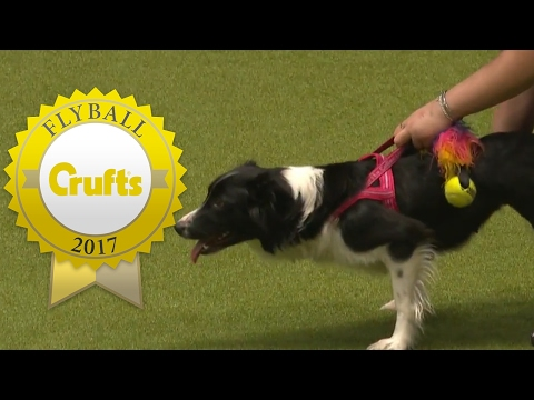 Flyball - Team Finals | Crufts 2017