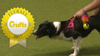 Flyball  Team Finals | Crufts 2017