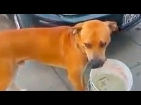 Chorrillos: perro conmueve al mundo al buscar agua con un balde
