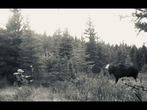 Alberta Archery Moose Hunt 2015