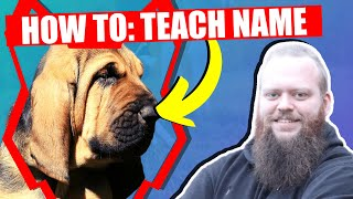 How To Teach Your BLOODHOUND PUPPY Their Name