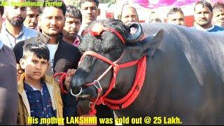 Heera Bull( हीरा झोटा) 25 लाख की भैंस Lakshmi का बेटा. @ CIRB Mela. Super Champion Murrah Bull.