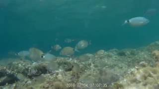 Snorkeling In Majorca