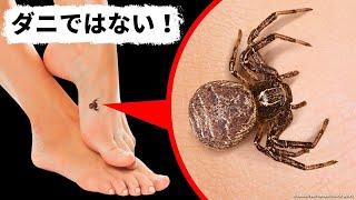 【閲覧注意】このクモは安全です!(マダニではありません!)