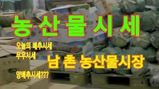 오늘의 농산물시세[남촌농수산물도매시장]