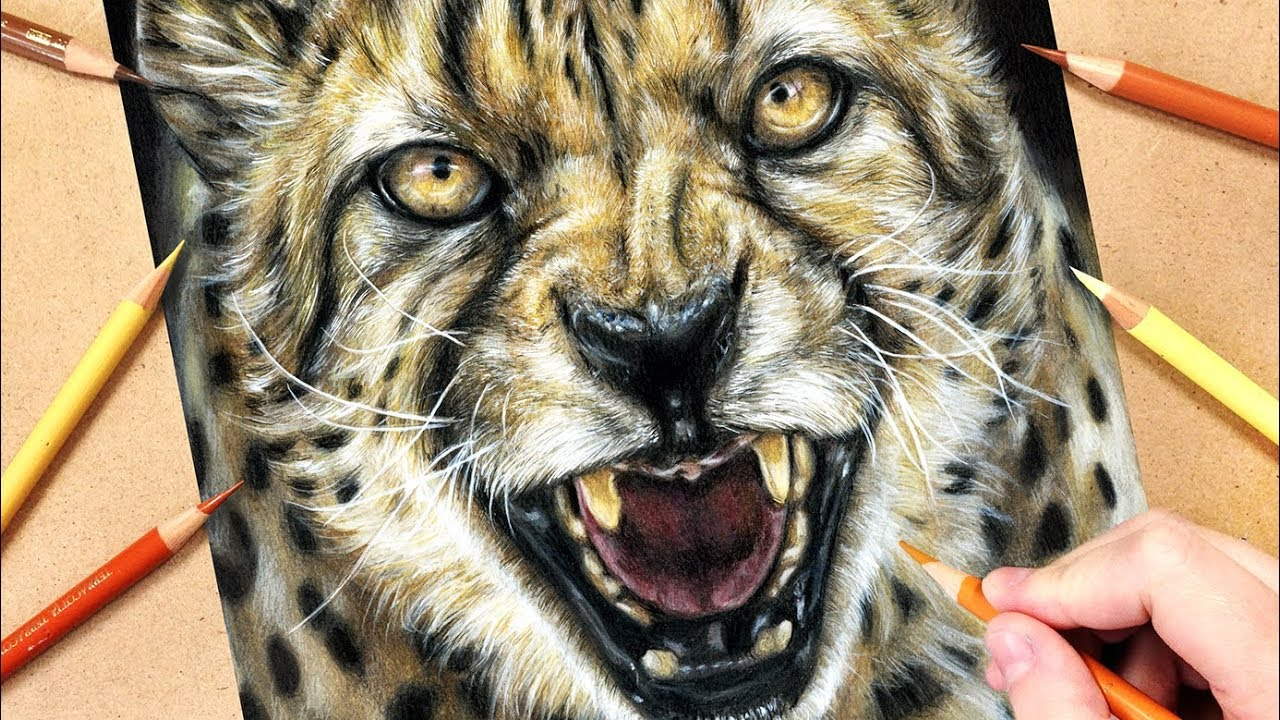 realistic animal cheetah drawing draw coloured pencils tutorial using painting