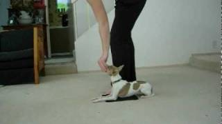 Dog Training: Mat, Drop On Recall + Heel (higherquality)