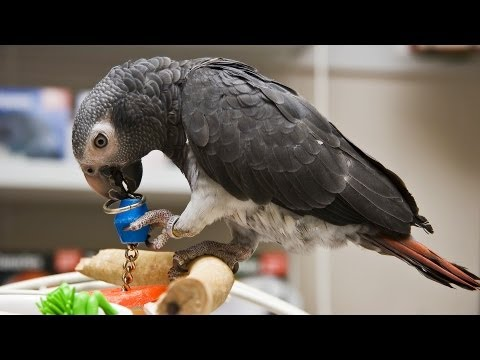 Different Types of Parrots | Pet Bird