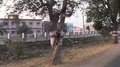 Acharya NG Ranga Agri Cultural University on Lam-Guntur-Amaravati Road-as on 07.02.2017