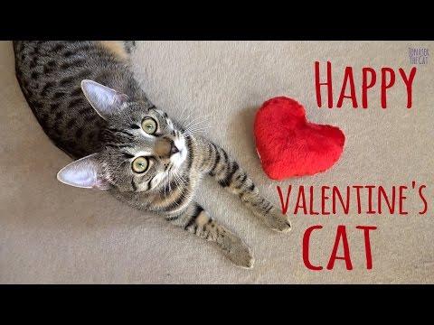 Happy Valentine's cat