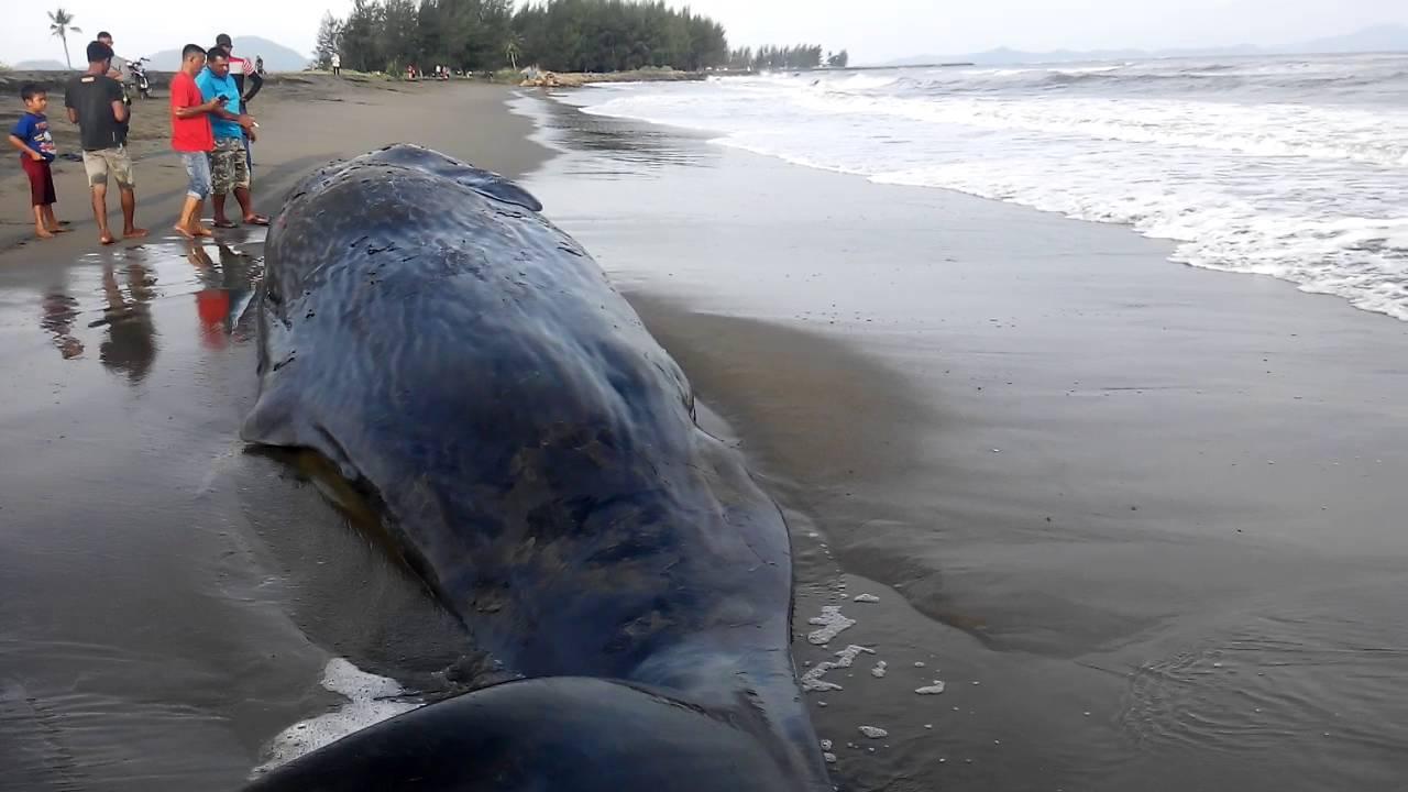 Download 450 Gambar Ikan Paus Yang Besar HD Gratis