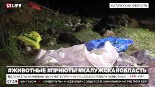 Зоозащитники спасают животных из приюта в Калужской области
