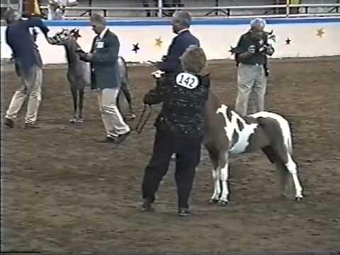 AMHR Aged Stallion Class-2001 Nationals.mp4