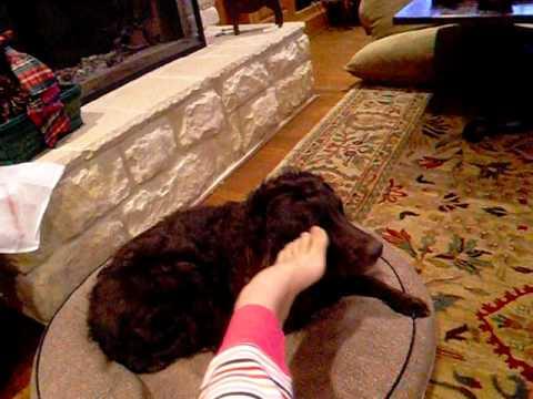 Dog Twitching Leg