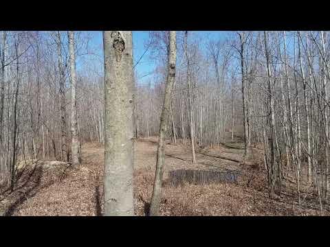 Michigan Hunting Land Tuscola County, Murray Rd, Caro, 52 Acres