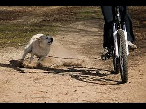 Image result for dog chasing bicycle