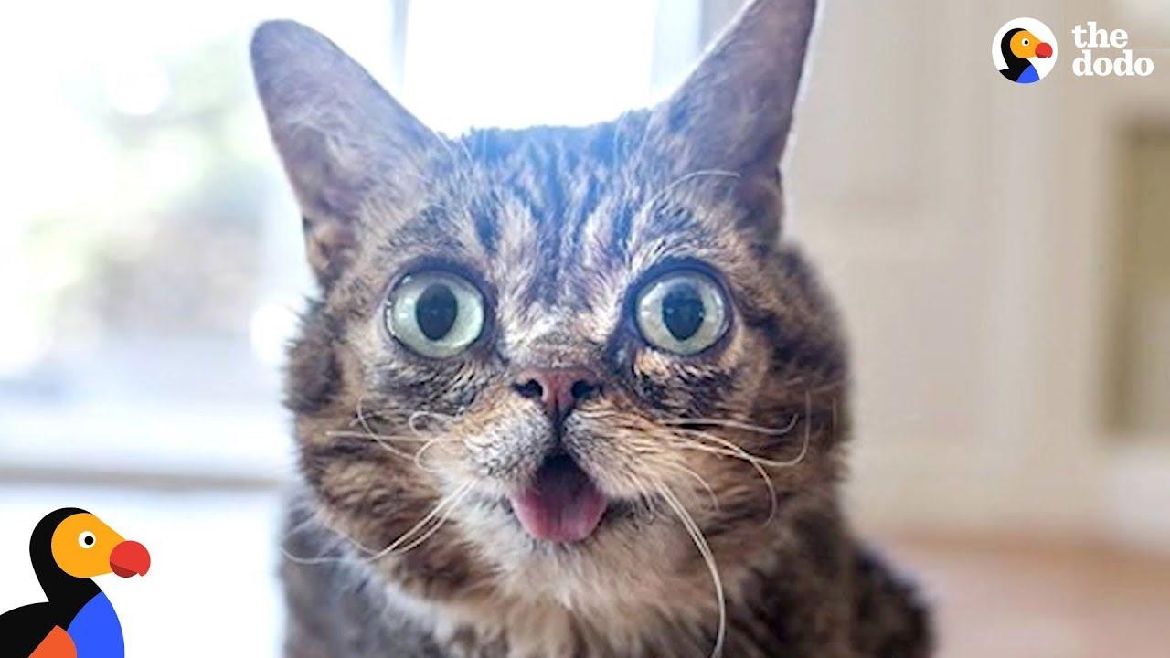 Cat's Unique Look Makes Her One In A Trillion - LIL BUB   The Dodo