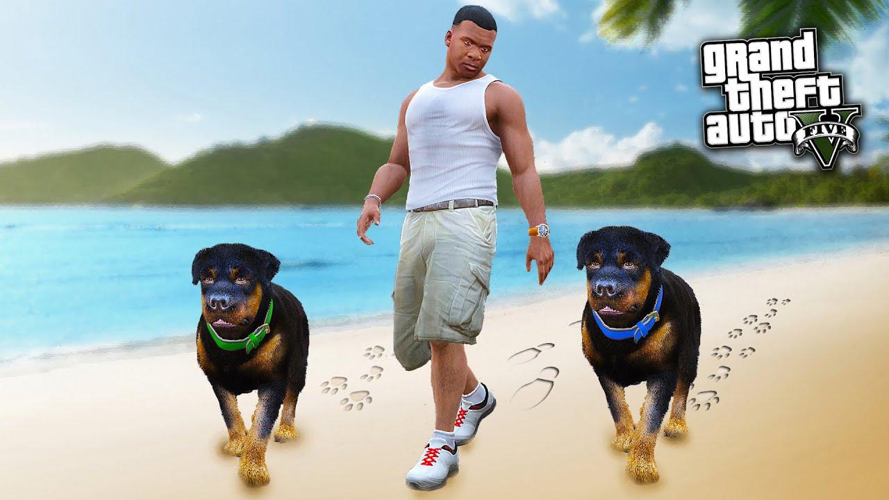 Gta  Chop Dogs