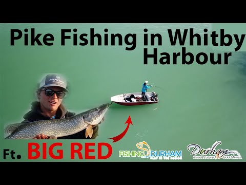 Fishing For Pike In The Durham Region! : TIMP Series