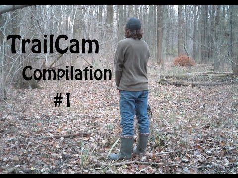 Trail Cam Compilation #1