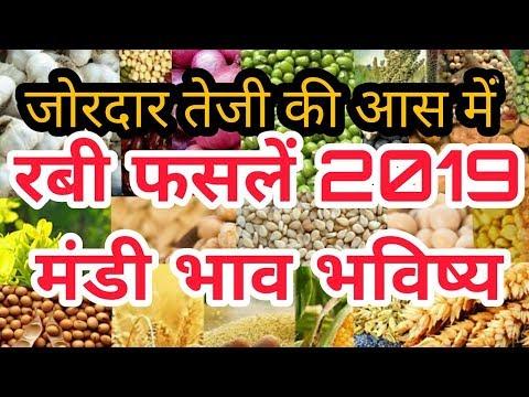 इन फसलों में जोरदार तेजी | 2600000 हैक्टेयर से ज्यादा गिरी रबी फसलों की बुवाई  - Mandi Bhav