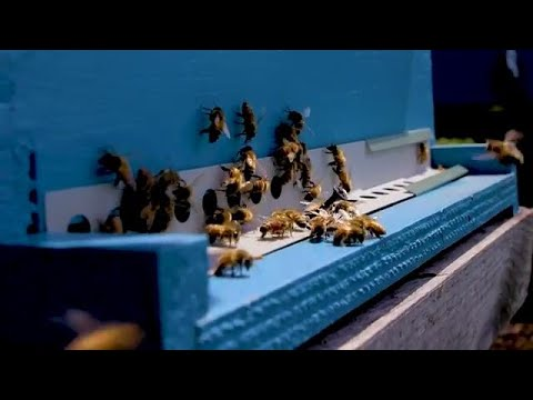 UN Celebrates First Ever World Bee Day (20 May)