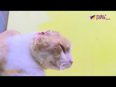 Человеческая жестокость: издевательства над животными участились