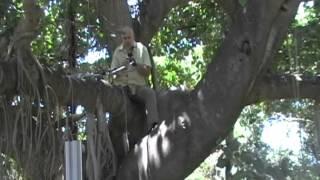עץ יקר אקומיוזיק