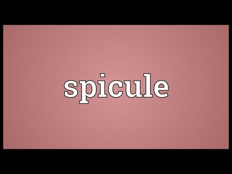 Spicule Meaning