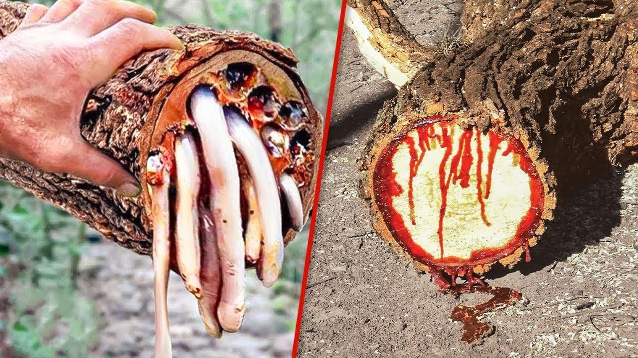 এই অদ্ভুত গাছ গুলো দেখলে আপনি অবাক হতে বাধ্য হবেন | The World's 10 Most Bizarre and Weird Trees